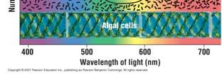 wavelengths from 380 to 550, what color would we see? 12 Which Wavelengths are Used in Photosynthesis: The Scientific Method at Work Question: Which wavelengths are used in photosynthesis?