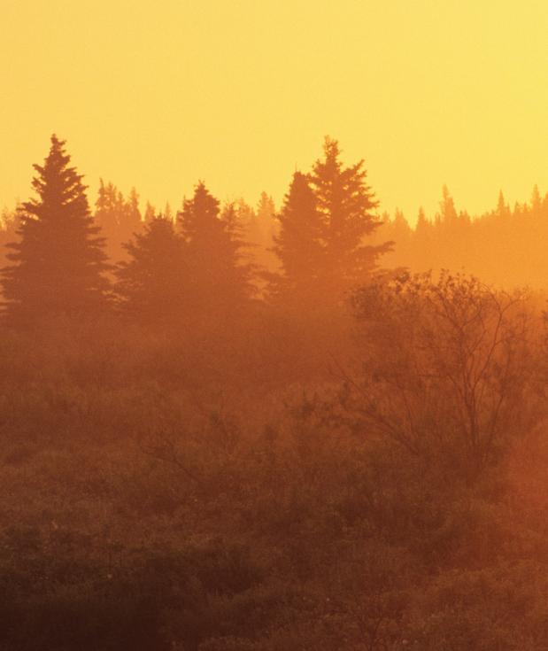 Photosynthesis Each year, Canada s boreal forest convert 12.