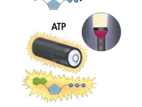 Like a Rechargeable Battery ATP can Release the Energy by breaking the bonds