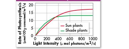 Temperature The reactions of photosynthesis are made possible by enzymes that function best between 0 C and 35 C.