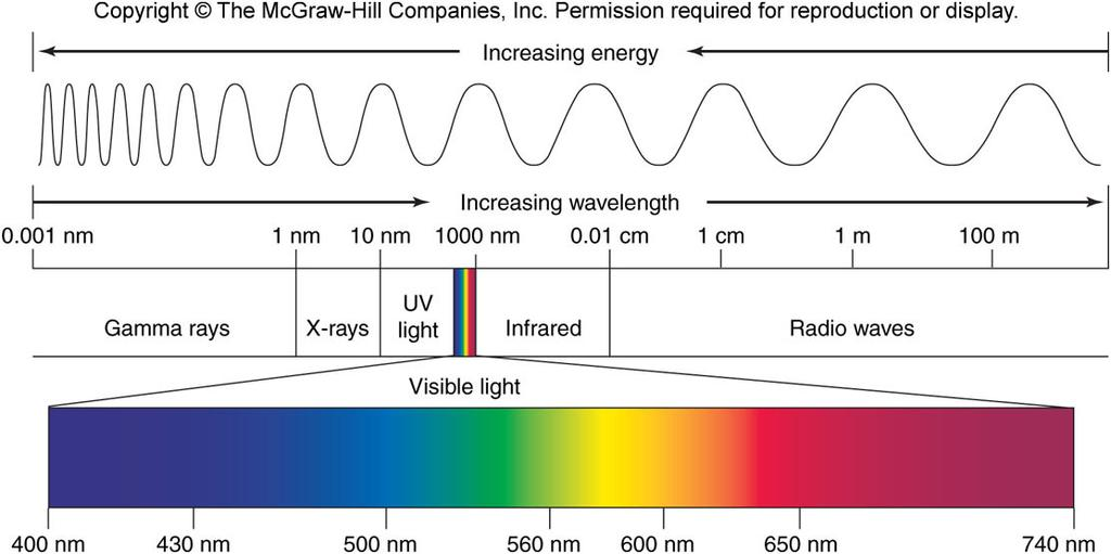 Pigments photon: a particle of light -acts as a discrete bundle of energy -energy content of a photon is inversely proportional to the wavelength of the light photoelectric effect: removal of an