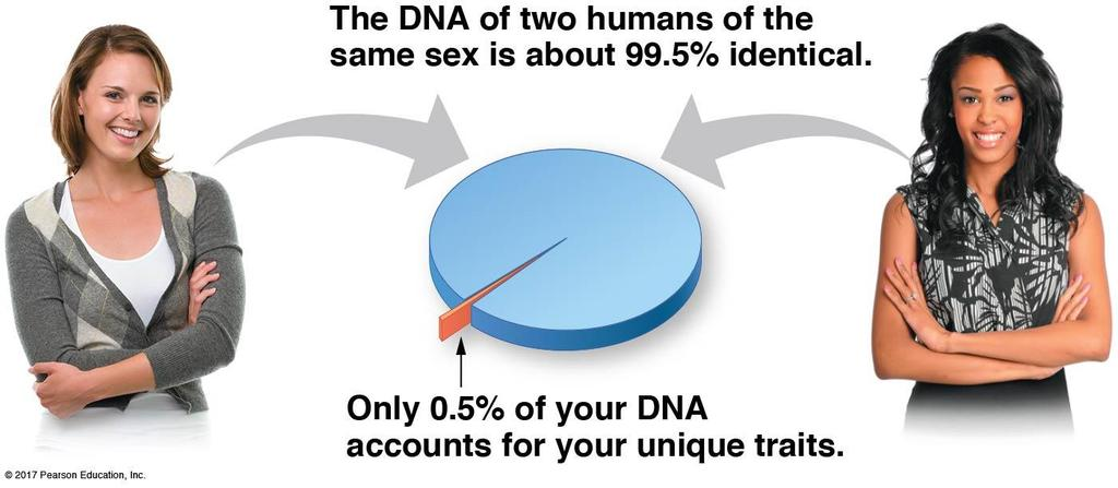 Chromosomes are associations of DNA and proteins: Chromosome number B. Chromosome number 6.