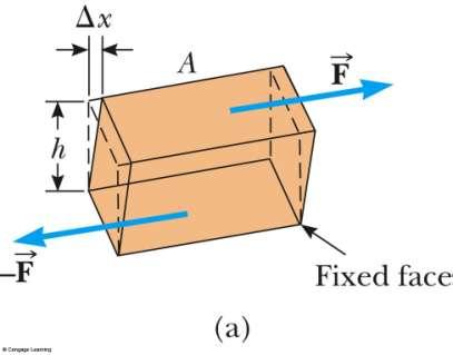 Shear Modulus: Elasticity of Shape Forces may be parallel to one of the object s faces The stress is called a shear