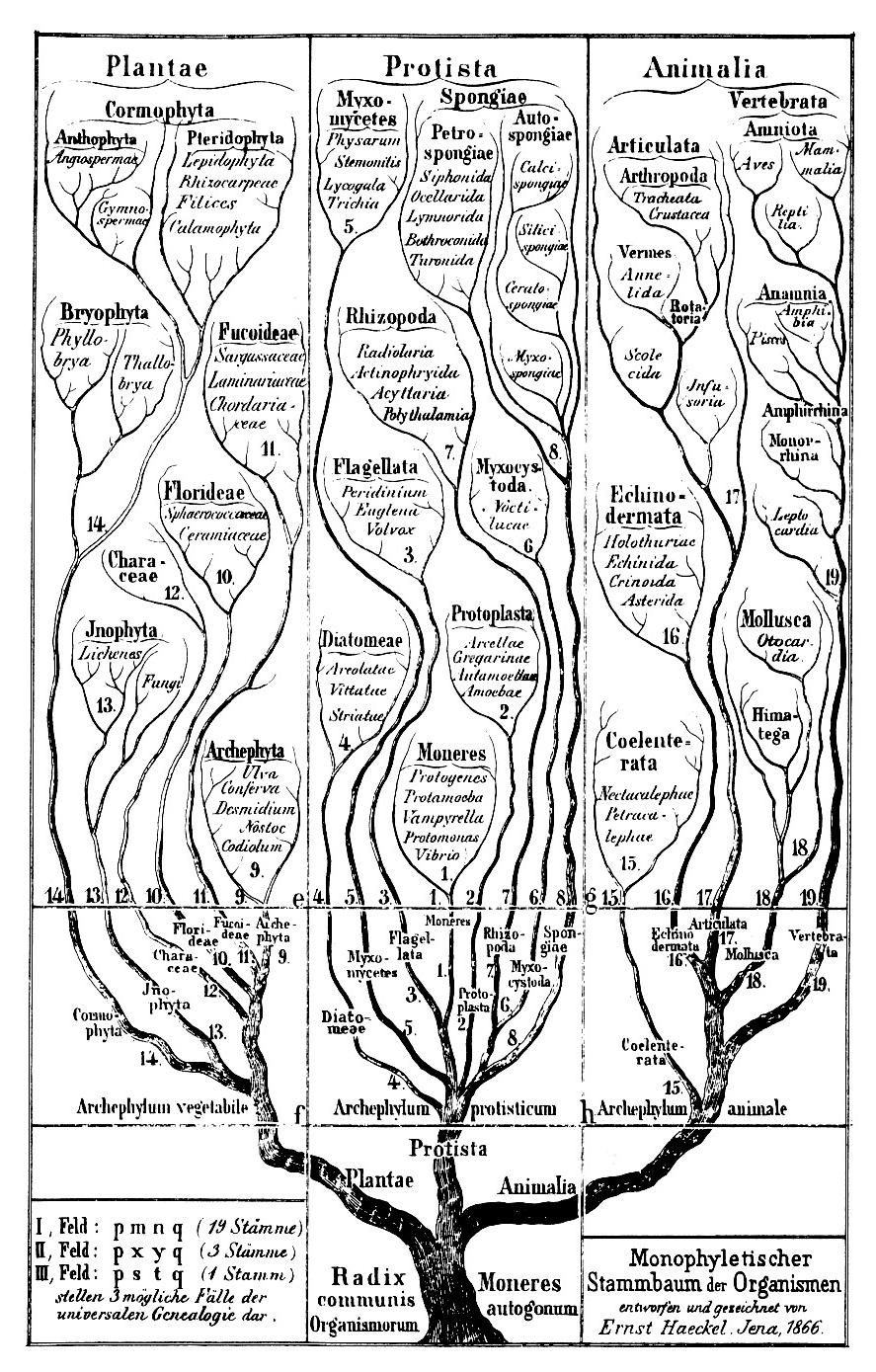 The phylogeny and classification