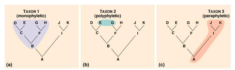 monophyletic taxon includes a group of organisms descended from a single ancestor polyphyletic taxon is composed of unrelated