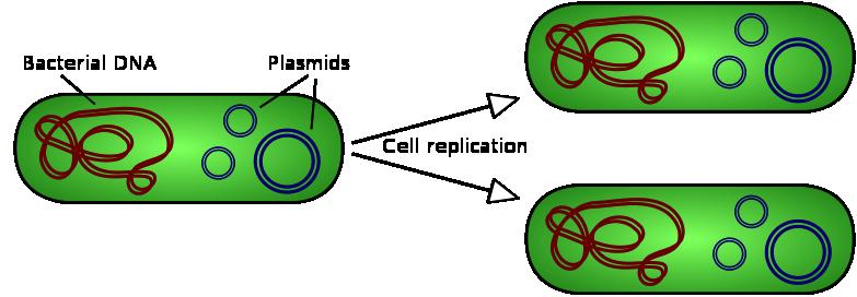 CONCEPT: SEXUAL REPRODUCTION Meiosis is a special type