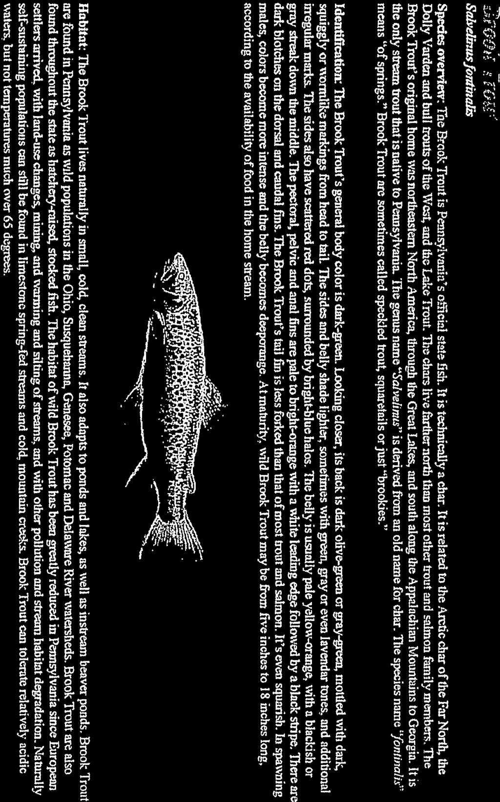 iallery of Pennsylvania Fishes - Chapter 15, Trout and Salmon Page 1 of 1 Sth eliezlrf(rnfhudis Species overviear: The Brag: Treat is tcunskei aiiieui stale It is foelsnicaliv a char.